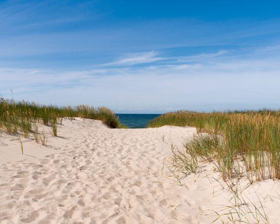 The path to the summer beach